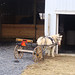 Amish Pony Cart