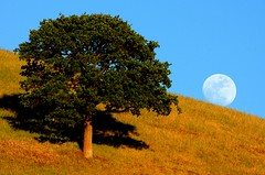 round valley moonrise 5-6 (Marc Crumpler (Ilikethenight)) Tags: california trees usa moon canon landscape hiking trails hills moonrise bayarea eastbay ebrpd roundvalley contracostacounty eastbayregionalparkdistrict canon70300isusm sfchronicle96hours 40d ebparks canon40d ebparksok