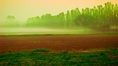 Dawn field