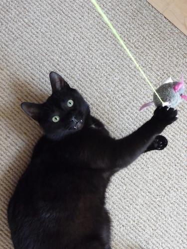 Vampire kitty toy pro