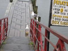 Birdies Waiting for a Snack (mscheesecake) Tags: oregon portland shanty oregoncoast