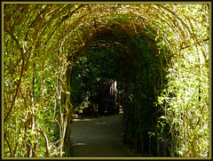 To The Secret Garden... (Fifi 1968) Tags: rose garden gate secret walled warwickcastle thesecretgarden adifferentpointofview bej abigfave franceshodgsenburnett