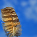 Great Horned Owl  Feather by jdmuth