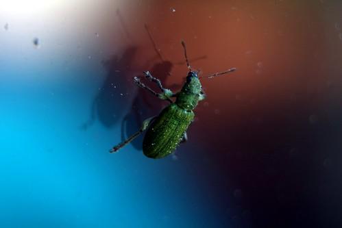 Käfer an der Terrassentür