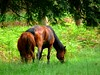 horses (Tasmin_Bahia) Tags: light shadow summer england horses colour detail green nature beautiful grass leaves garden outside outdoors leaf pretty peace shadows natural branches peaceful sunny fresh simple magical bushes