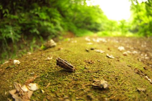 200906062174歩くミノムシ
