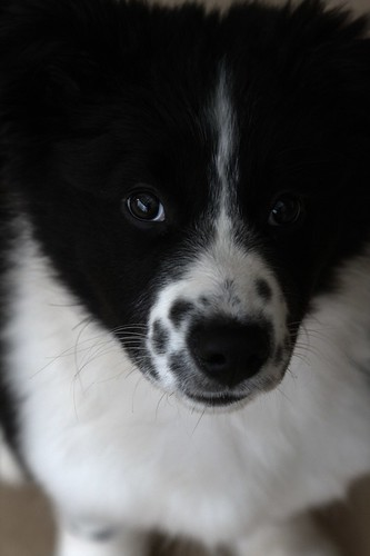 Marys photo of Po