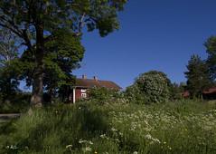 greenery (Urtsan) Tags: blue sky house green weather colorful branches sunny wildflowers calmness colorart scandinavianoutdoor zuikodigital1454f2835ii
