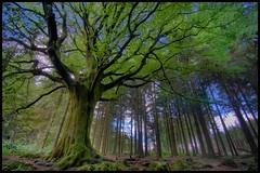 broceliande - Habits de Printemps pour Ponthus (philippe MANGUIN photographies) Tags: old tree castle nature forest table arthur spring king secret bretagne breizh gael histoire chateau cheva