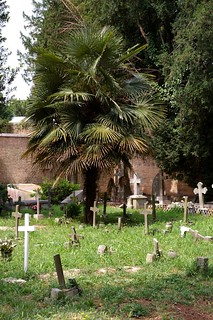 Palm and crosses