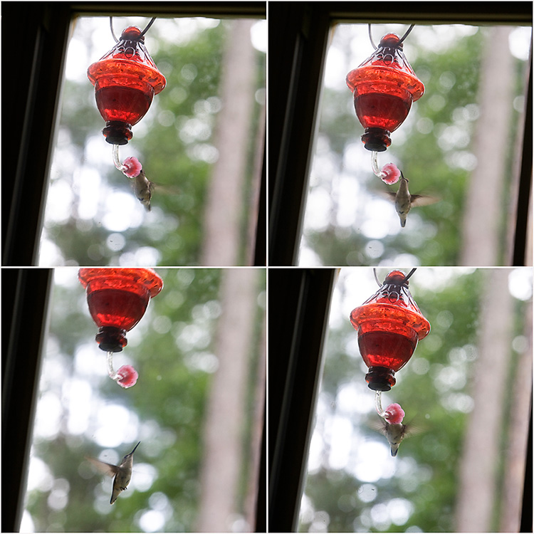hummingbird_blog1