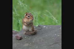 come on baby, let's do the twist (jude) Tags: movie chipmunk slideshow jedgarhoover thetwist supereco