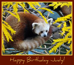 Happy Birthday ajay77! (RoxandaBear) Tags: tree fall leaves june yellow october judy reds 2008 birthdaycard 2009 shama redpandas 62509 101208 goldstaraward ajay77