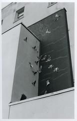 Wingmen (chad_k) Tags: seattle blackandwhite bw streetart film 35mm blackwhite washington tmax broadway contax g2 decal tmax400 capitolhill contaxg2 espressovivace