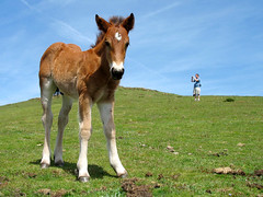 The Foal and my Son in Spain - Distorted Proportions (Batikart) Tags: travel blue vacation sky people horse cloud sun mountain holiday plant man flower color green art nature berg grass animal closeup fairytale canon landscape geotagged spring spain europa europe pov w