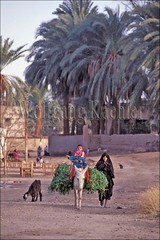 10040156 (wolfgangkaehler) Tags: africa village transport egypt donkey villages transportation farmer agriculture alfalfa villagelife denderaegypt