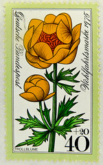 beautiful stamp Germany 40+20 pf. blume flower Trollblume globeflower (Trollius) postage 40 +20 pfennig deutschland germany stamp allemagne mission de charit timbre emissione di beneficenza charity issue bollo selo stamp Blume flower stamp 40 pf + 20pf (stampolina) Tags: red orange flores flower verde green rot postes germany deutschland amber rojo stamps vert stamp vermelho collection porto 1975 grn blume timbre rood rosso naranja allemagne arancio postage franco vermilion duitsland vermillion stempel revenue merah vis marke selo marka allemand sello sellos  bundesrepublikdeutschland  punainen  briefmarken rouges czerwony trollius trollblume pulu briefmarke francobollo