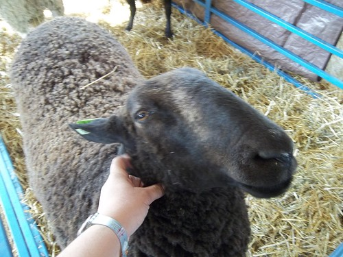 sheep scritchies