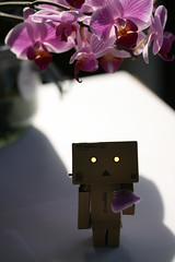 Please? (iiisecondcreep) Tags: orchid flower canon toy found lost missing phalaenopsis story help phal danbo canon60mmf28 400d danboard