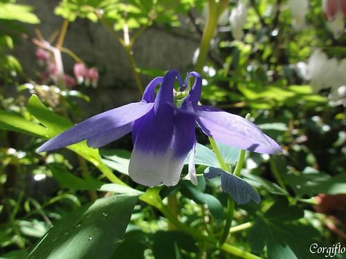 blog110523-jardin-01