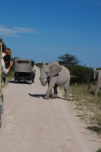 Visitas al Parque Nacional de Etosha