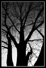 Winter mood (FotoBob#) Tags: winter bw tree silhouette canon 木 冬 白黒 canoneos5d canonef1740l anawesomeshot bwartaward