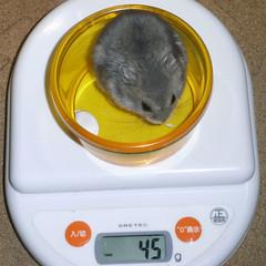 コー太は体重が減りました