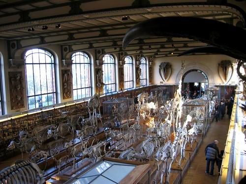 Les Galeries de Paléontologie et dAnatomie Comparée