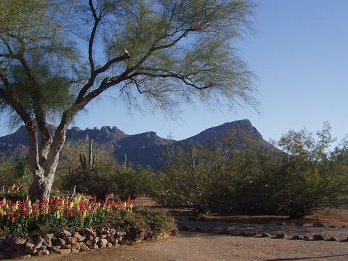 White Stallion Ranch in Tucson