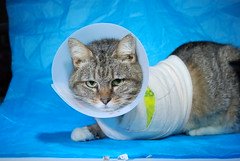 Brownie (Robbie Cordero) Tags: animal cat feline abuse injured