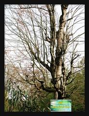 ●Unveil Tree (Nikar`๑´-) Tags: tree veil mazandaran unveil درخت neka حجاب مازندران nikar canong9 بیحجاب negarkiani نیکار نکا نگارکیانی ghormaraz قرمرض درختبیحجاب کانونجینه unveiltree حجابمصونیتاستنهممنوعیت