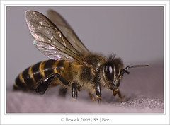 6.1 Bee ... flew in on my sofa ...