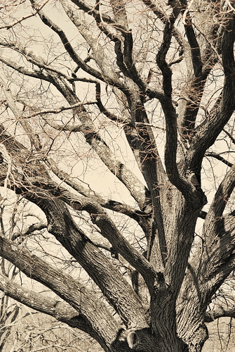 Branches 1.