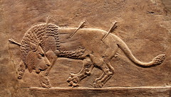 Assyrian Royal Lion Hunt ( Libyan Soup) Tags: animal killing wounded iraq hunting lion carving relief arrows britishmuseum dying mesopotamia hunt injured lionhunt assyria assyrian northpalace ninevah lionhunting royallionhunt royalhunt kingashurbanipal