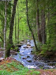 20050516_03 Creek in Vstergtland, Sweden (ratexla) Tags: 2005 water beautiful creek forest landscape scenery europe sweden norden skandinavien sverige scandinavia nordiccountries inagallery gsgsgs vstgtabergen photophotospicturepicturesimageimagesfotofotonbildbilder