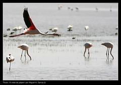 A vista de pájaro (.Kikaytete.QNK) Tags: huelva laguna flamenco doñana naturesfinest blueribbonwinner supershot mywinners kikaytete platinumheartaward theperfectphotographer rubyphotographer
