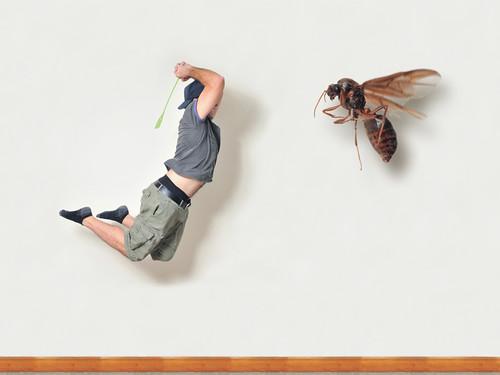 Shoo Fly...