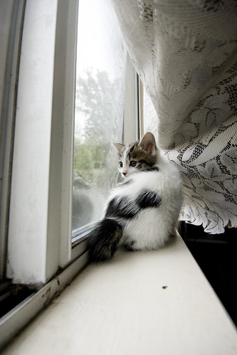 On the window