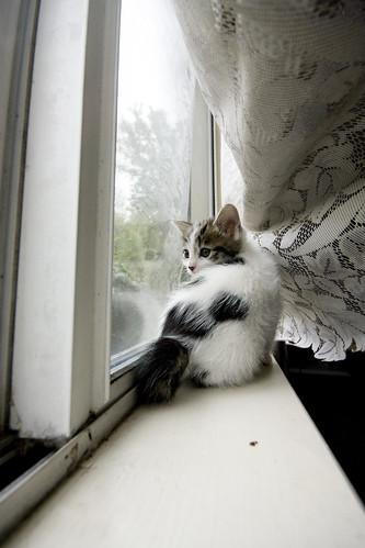 On the window