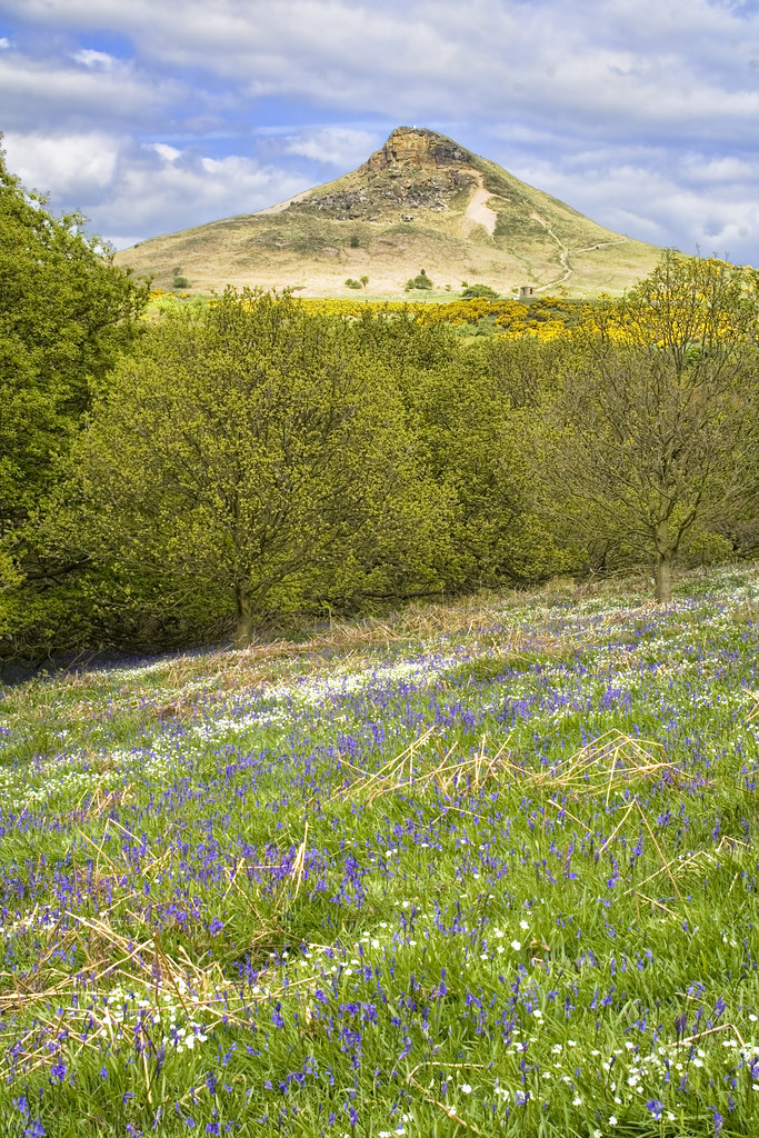 roseberry topping with bluebells IMG 7490