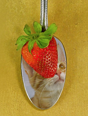 Spoonful of Sugar?? (njk1951) Tags: cat reflections baxter gatto inthespotlight myhelper reflectionofcat spoonfulofcat spoonfulofbaxterandstrawberry catandberry