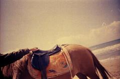 lomo_k100_1may_35 (mariczka) Tags: sea horse sun film beach yellow analog turkey iso100 lomo lomography sand mediterranean side overexposed  kodakprofoto100 vintageanalogue gulfofantalya internationalcommiecameraday2009 horusparadisehotel lomoturkeyseries nilebeach analoguealphabettag