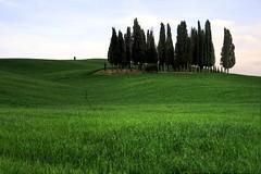 Toscana, mon amour! (Peeboo (www.peeboo.weebly.com)) Tags: campagna tuscany montalcino toscana grano cipressi