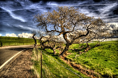 Country Road (Michael Brooking Photography) Tags: california road sky tree green grass clouds fence oak nikon alone contrail peace walk bluesky line pasture lone barbwire hdr altamont mywinners d700 michaelbrookingphotography