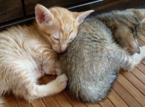 Cuddley-cuddlo