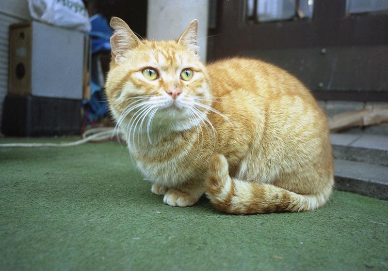焼き鳥屋の猫