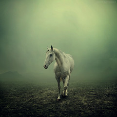 Age of Loneliness (swinspeed) Tags: portrait sky horse mist green art beautiful animal clouds digital photoshop dark landscape one amazing interesting alone loneliness magic dream surreal best age land imagination 2009 tone equine swinspeed