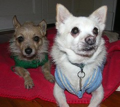Chi and Quila in their jumpers