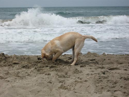 Roger on the beach