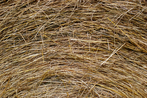 upper part of a bale of hay